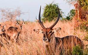 deers in the field