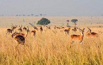 Sublime Savanna Safari
