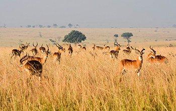 Sublime Savanna Safari