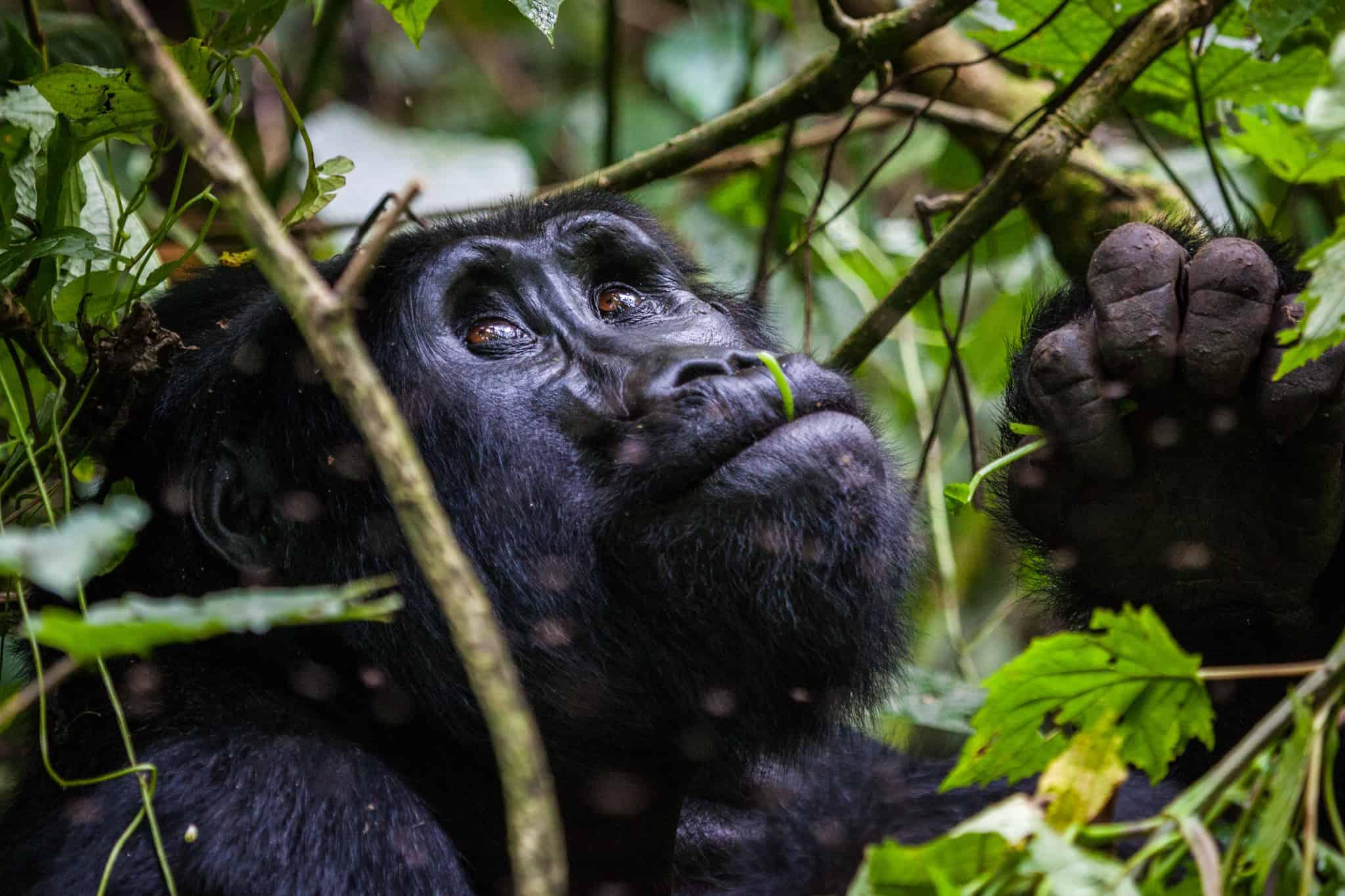 Empire of Apes Safari - Day 3