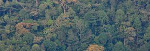 trees and treeline