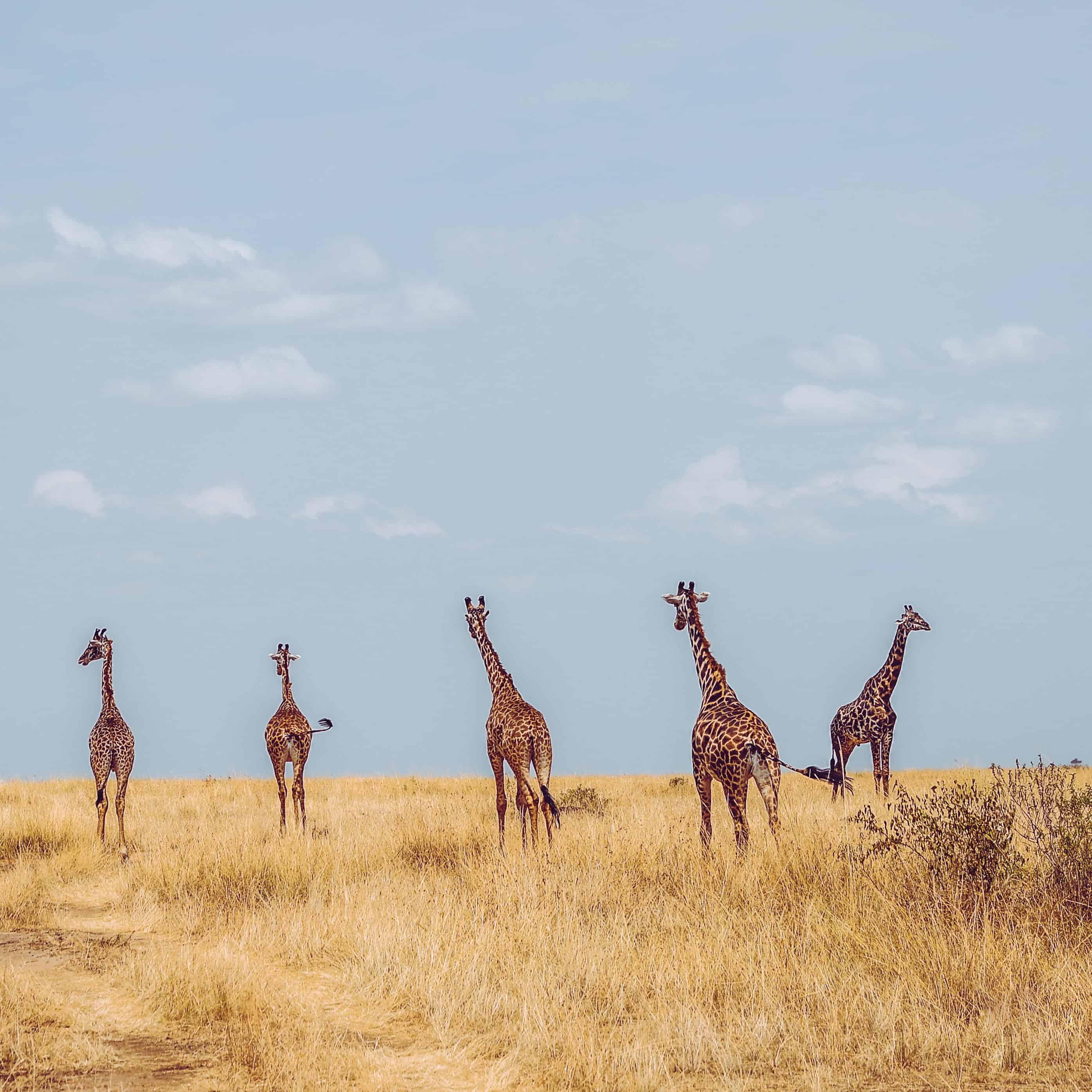 Majesty of Murchison Safari - Day 3