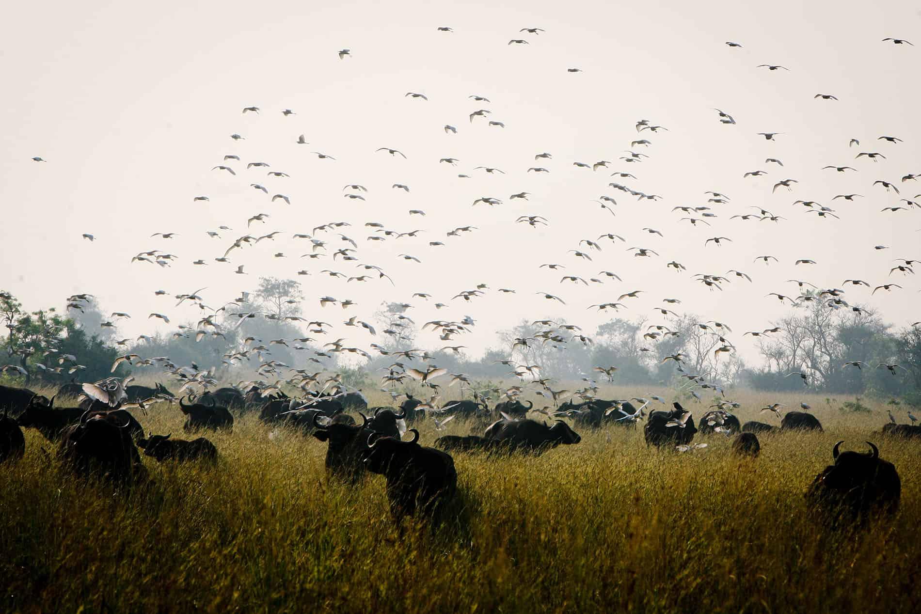 Majesty of Murchison Safari - Top Image