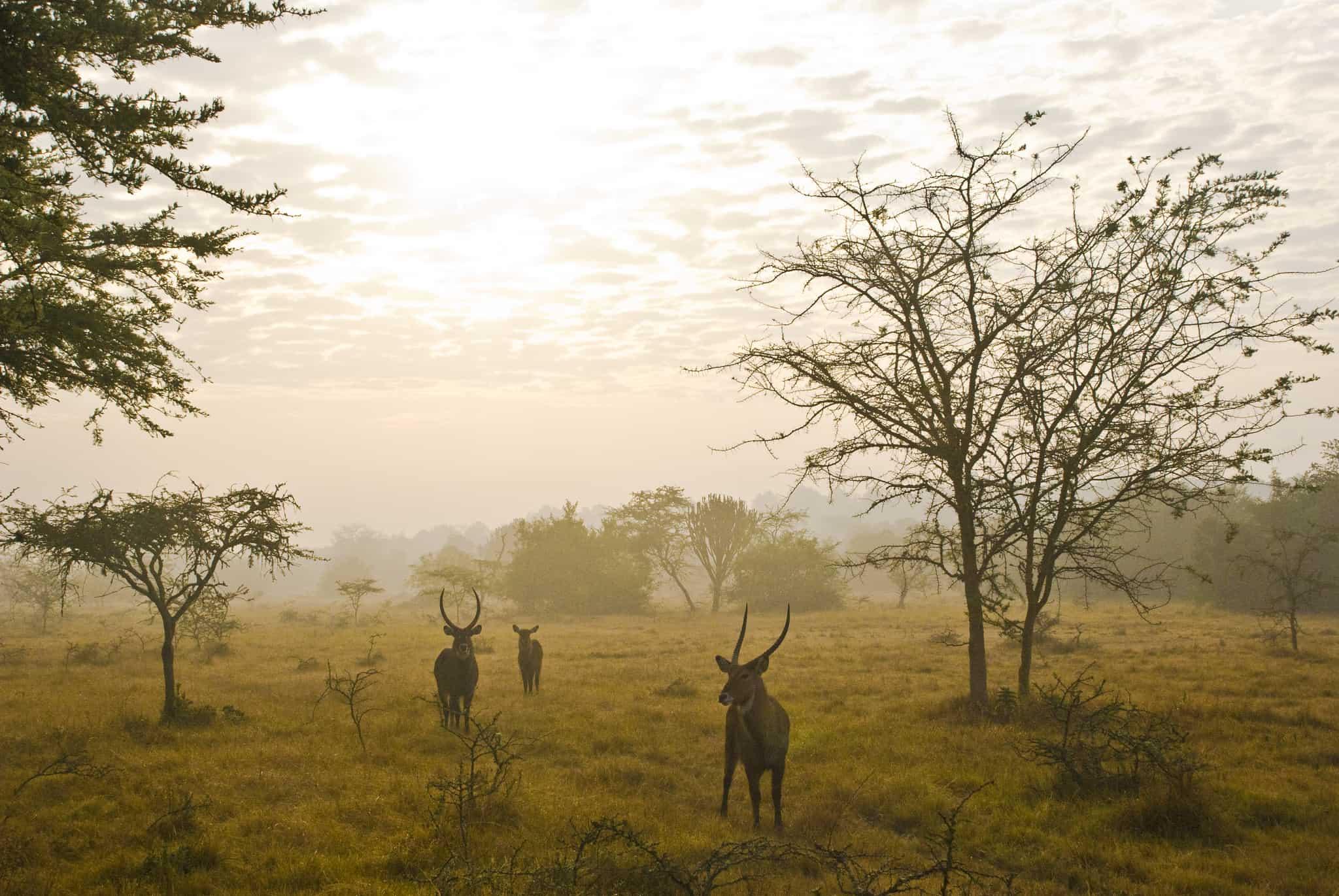 Uganda Deluxe Safari - Day 3