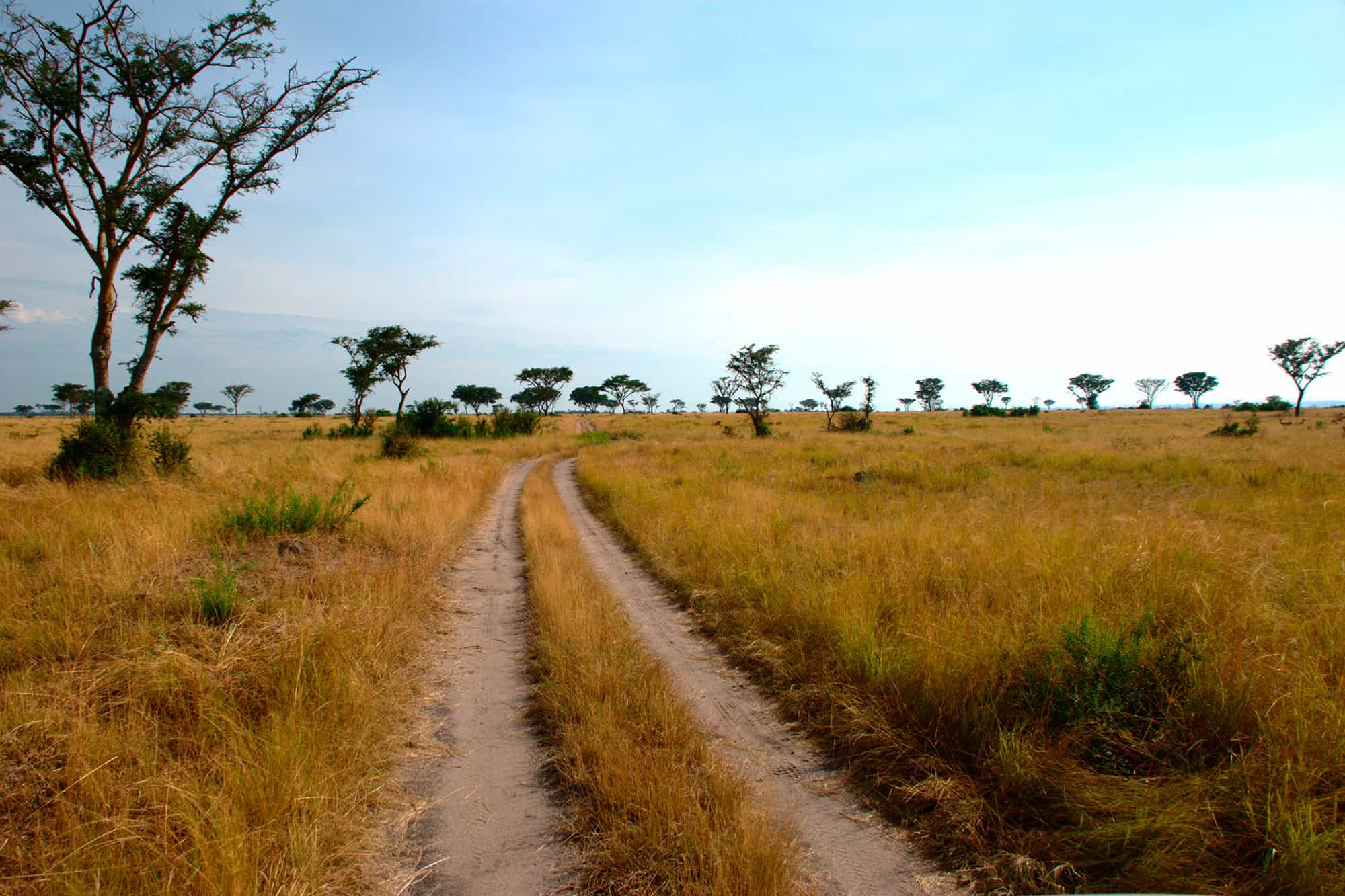 Wildlife and Wanderlust Safari - Day 3