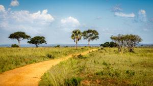 wildlife and wanderlust safari