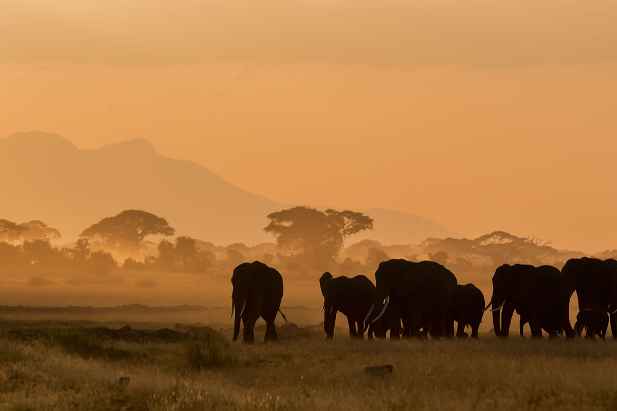 wildlife and wanderlust safari