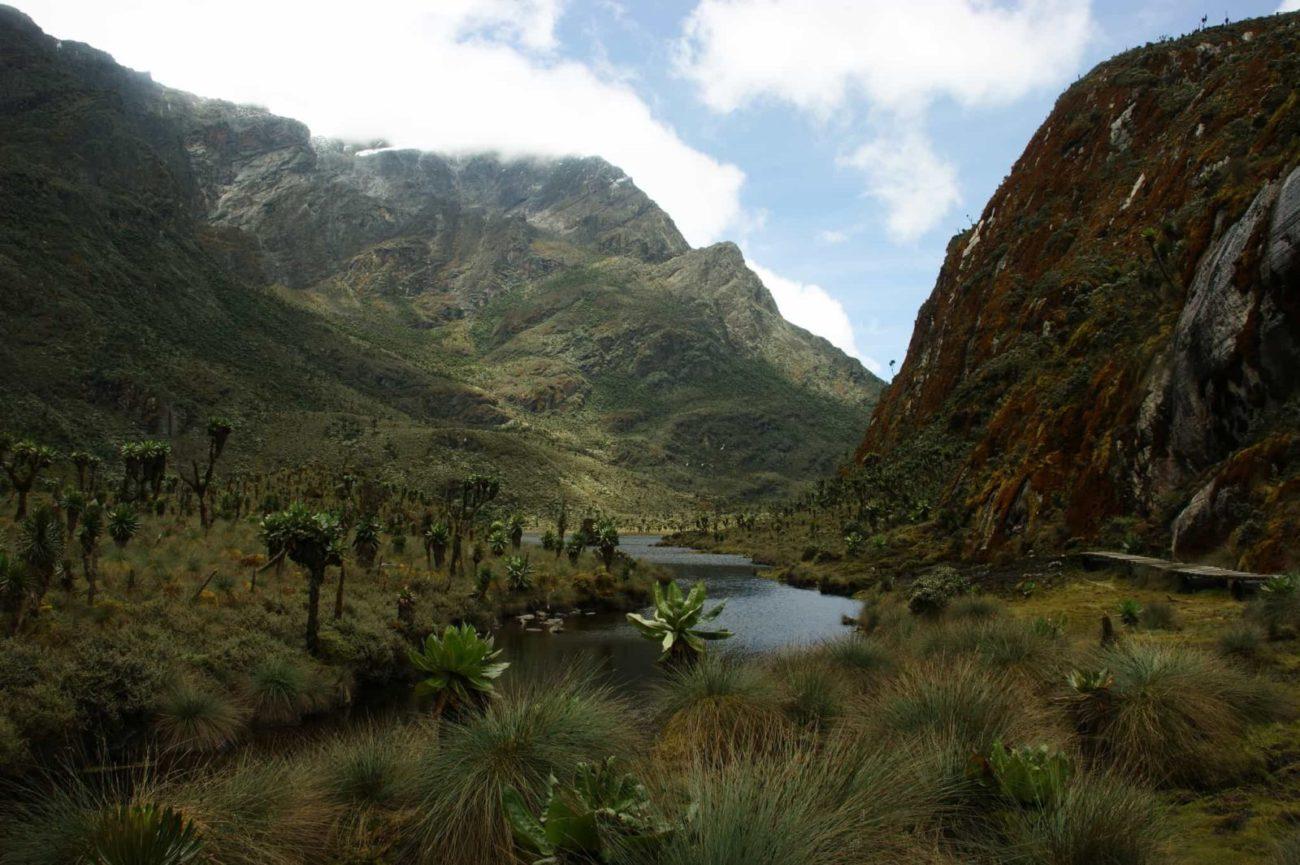 Mount Rwenzori_12