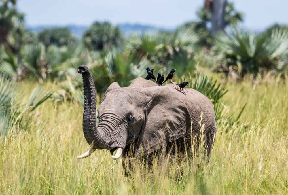 Incredible Attractions You'll Discover With Bushman Safaris