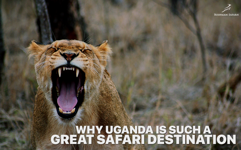 Why Uganda Is Such A Great Safari Destination