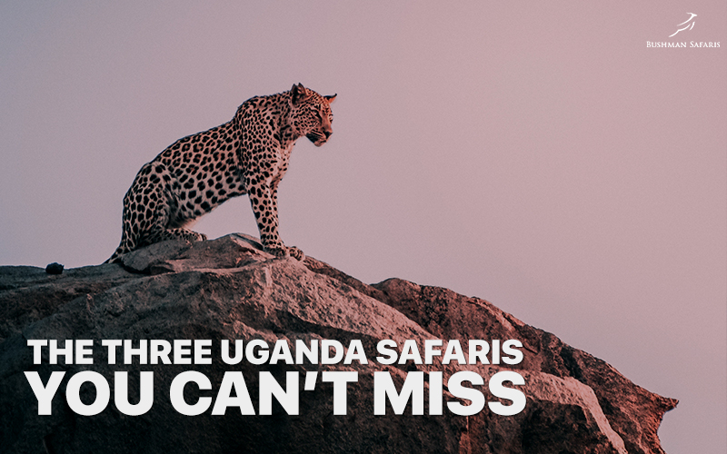 The Three Uganda Safaris You Can't Miss
