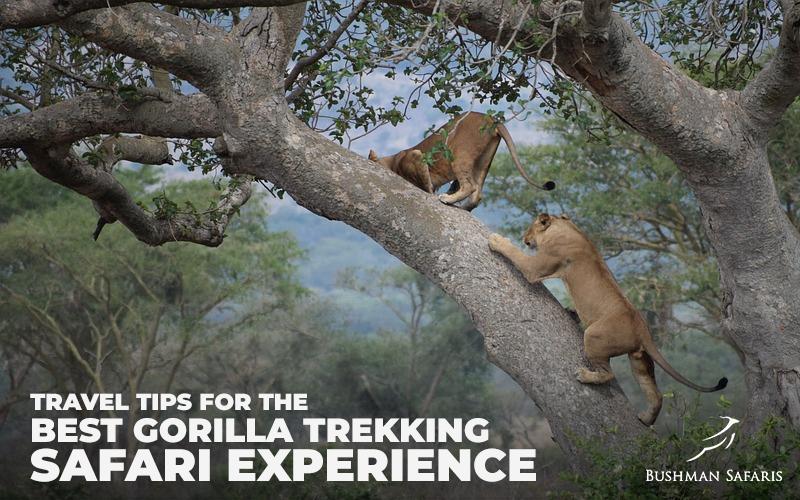 Travel Tips For The Best Gorilla Trekking Safari Experience