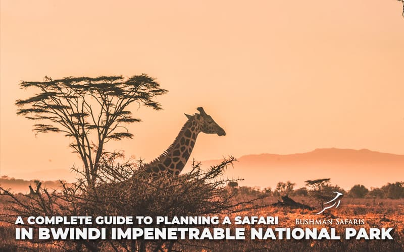 A Complete Guide To Planning A Safari In Bwindi Impenetrable National Park
