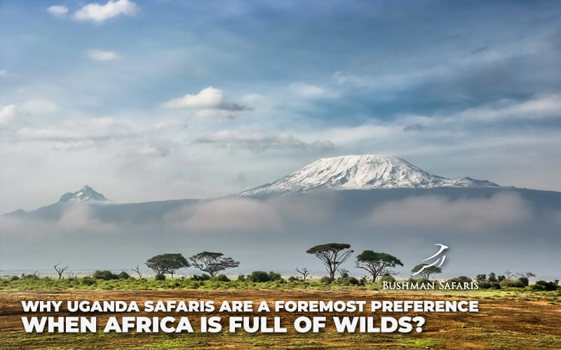 Why Uganda Safaris Are A Foremost Preference When Africa Is Full Of Wilds?