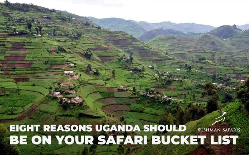 Eight Reasons Uganda Should Be On Your Safari Bucket List