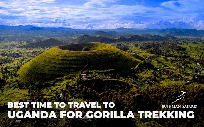 Best Time To Travel To Uganda for Gorilla Trekking