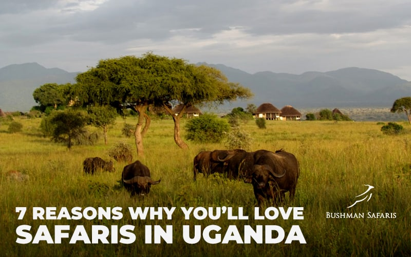 7 Reasons Why You'll Love Safaris in Uganda