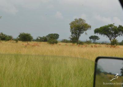 Bushman Safaris Uganda