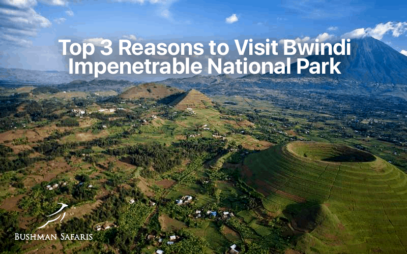 Top 3 Reasons to Visit Bwindi Impenetrable National Park