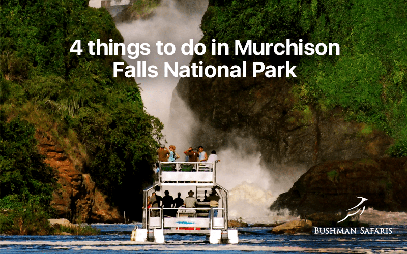 4 Things to do in Murchison Falls National Park
