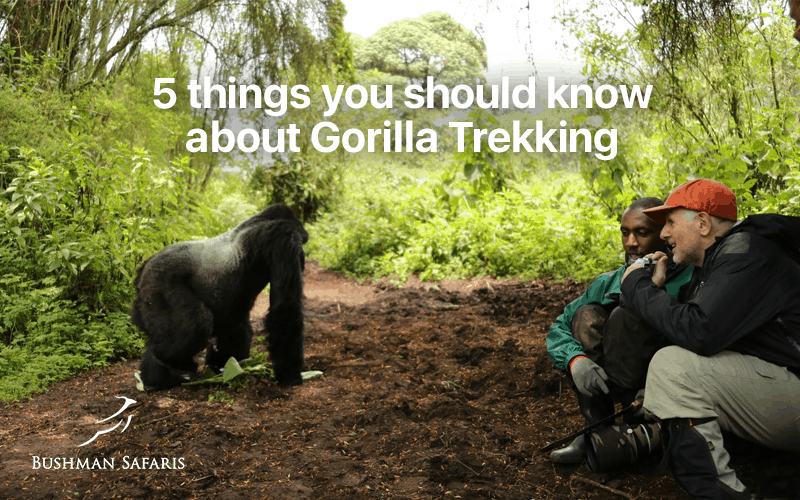 5 Things You Should Know About Gorilla Trekking