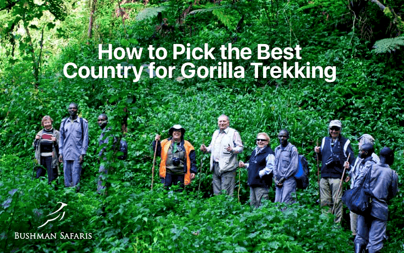How to Pick the Best Country for Gorilla Trekking