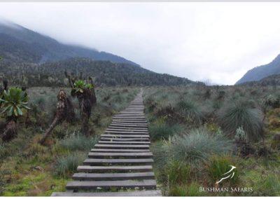 Rwenzori Mountain Uganda