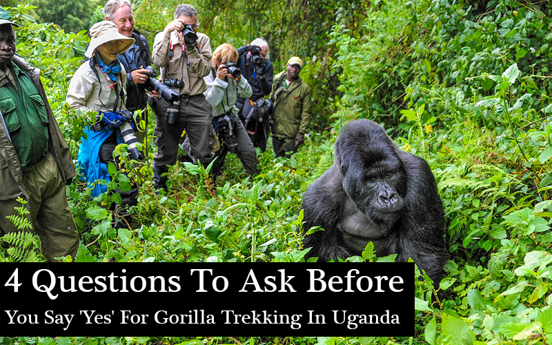 4 Questions To Ask Before You Say 'Yes' For Gorilla Trekking In Uganda