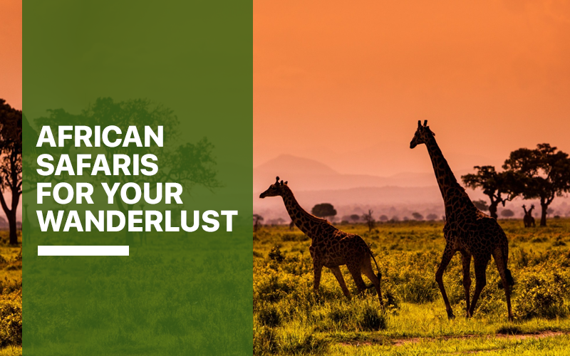 African Safaris for Your Wanderlust