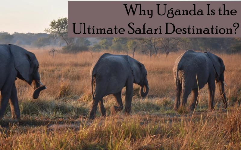 Why Uganda Is the Ultimate Safari Destination