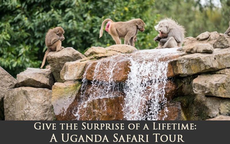 Uganda Safaris: A Life-Changing Experience