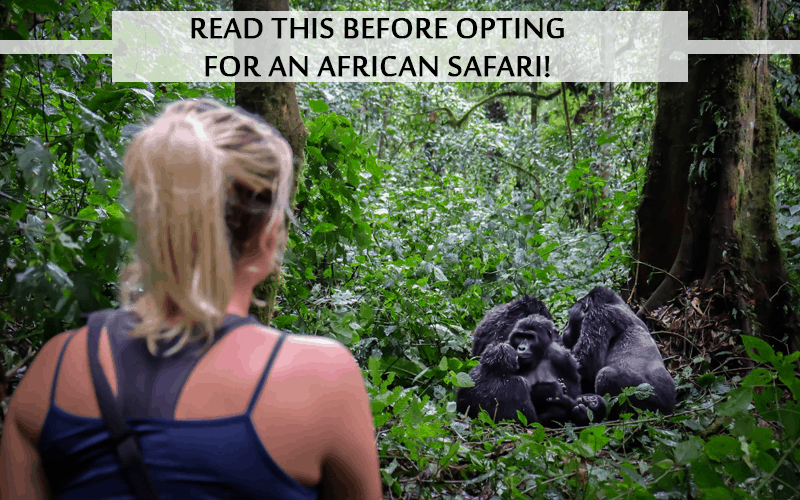 opting for an African Safari