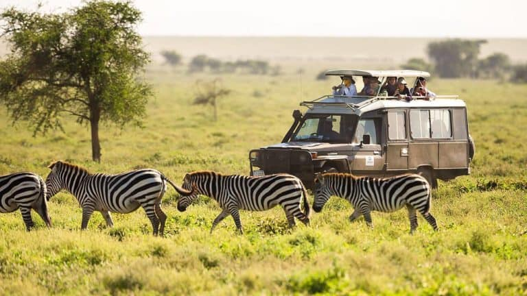 Here's how to make it an Affordable African Safari