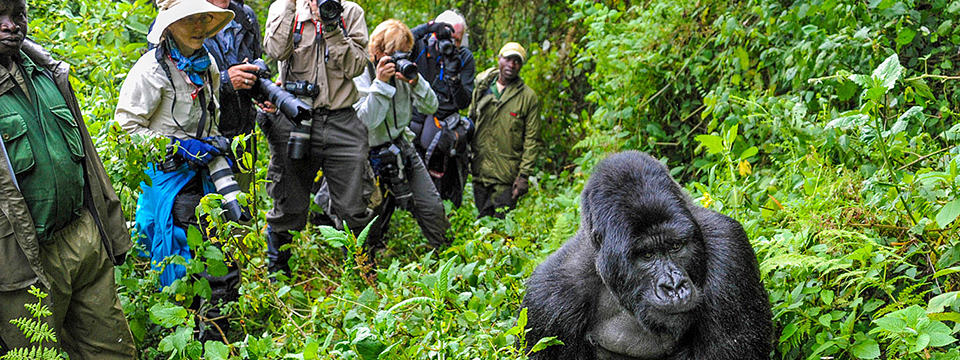 5 Myths about Gorilla Trekking in Uganda