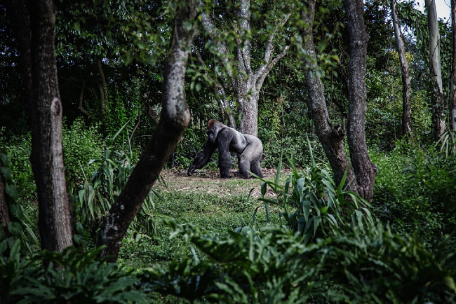 What You Must Know About Bwindi National Park