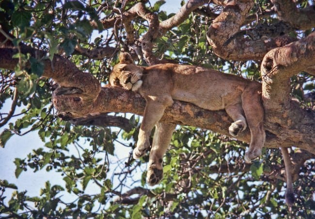 Why Our Wildlife And Wanderlust Safari is an Ideal Getaway Option?