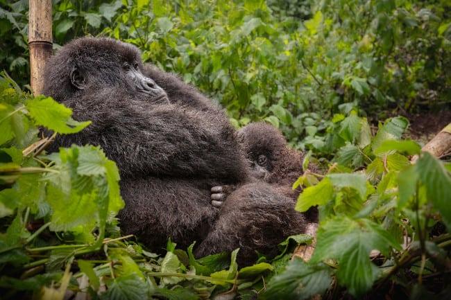 How to Prepare Your Body for a Gorilla Trekking Adventure