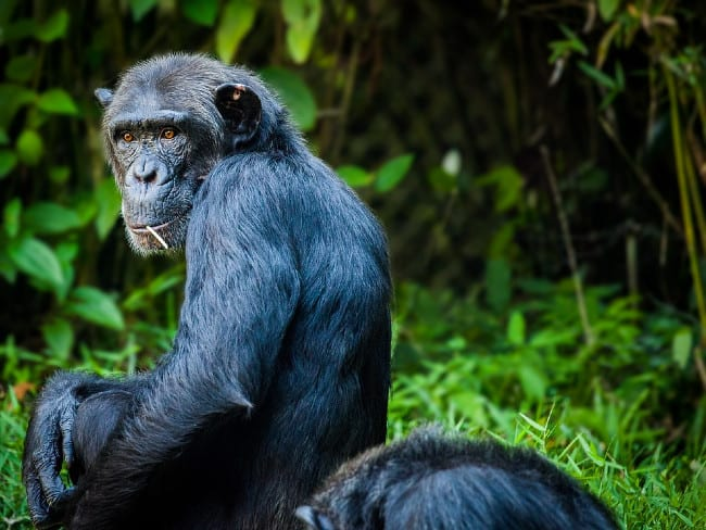 6 Primates You Get to See on Bushman's Safaris and Tours