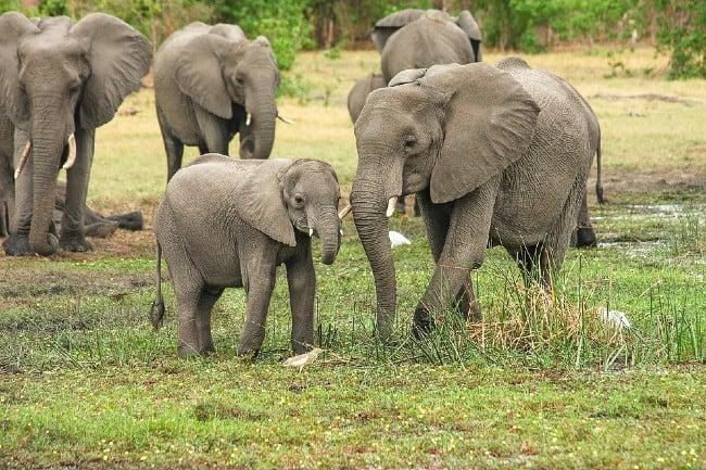 9 Things to Know Before You Go on an African Safari