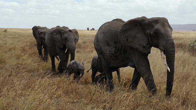 Why Go to an Unforgettable African Safari