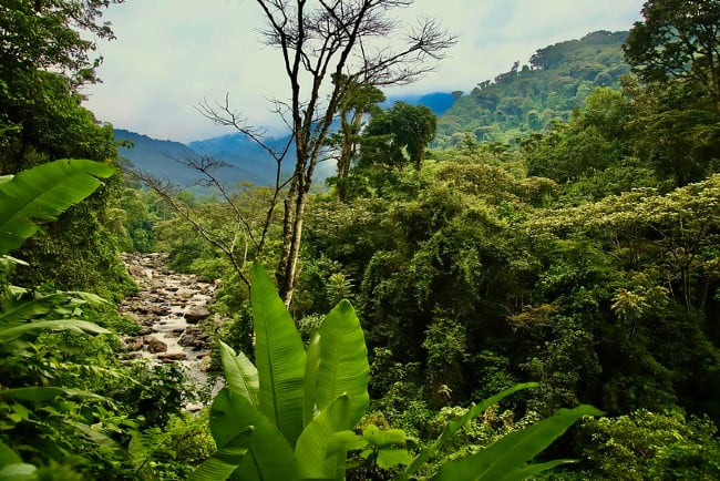 All You Need To Know As You Trek Up Rwenzori Mountains